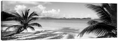Palm trees on the beach, US Virgin Islands, USA Canvas Print #PIM11936
