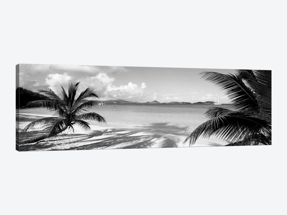 Palm trees on the beach, US Virgin Islands, USA by Panoramic Images 1-piece Canvas Print