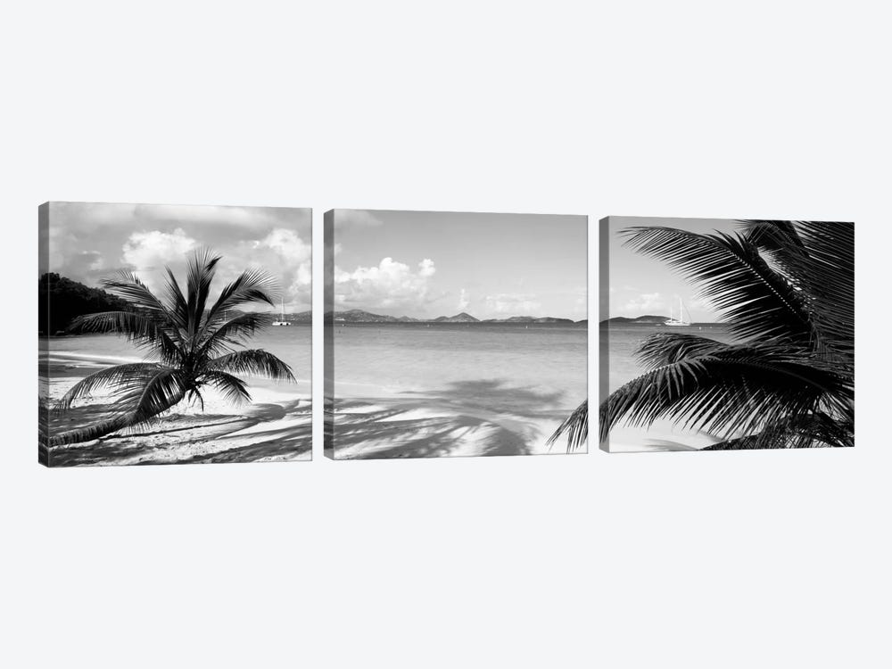 Palm trees on the beach, US Virgin Islands, USA by Panoramic Images 3-piece Canvas Art Print