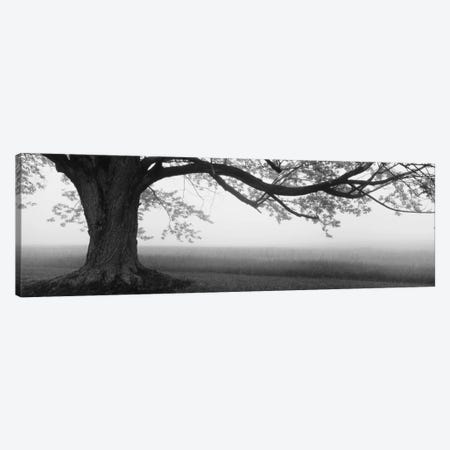 Tree in a farm, Knox Farm State Park, East Aurora, New York State, USA Canvas Print #PIM11937} by Panoramic Images Canvas Wall Art