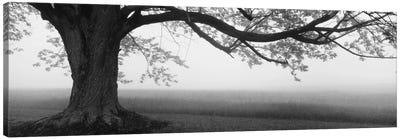 Tree in a farm, Knox Farm State Park, East Aurora, New York State, USA Canvas Print #PIM11937