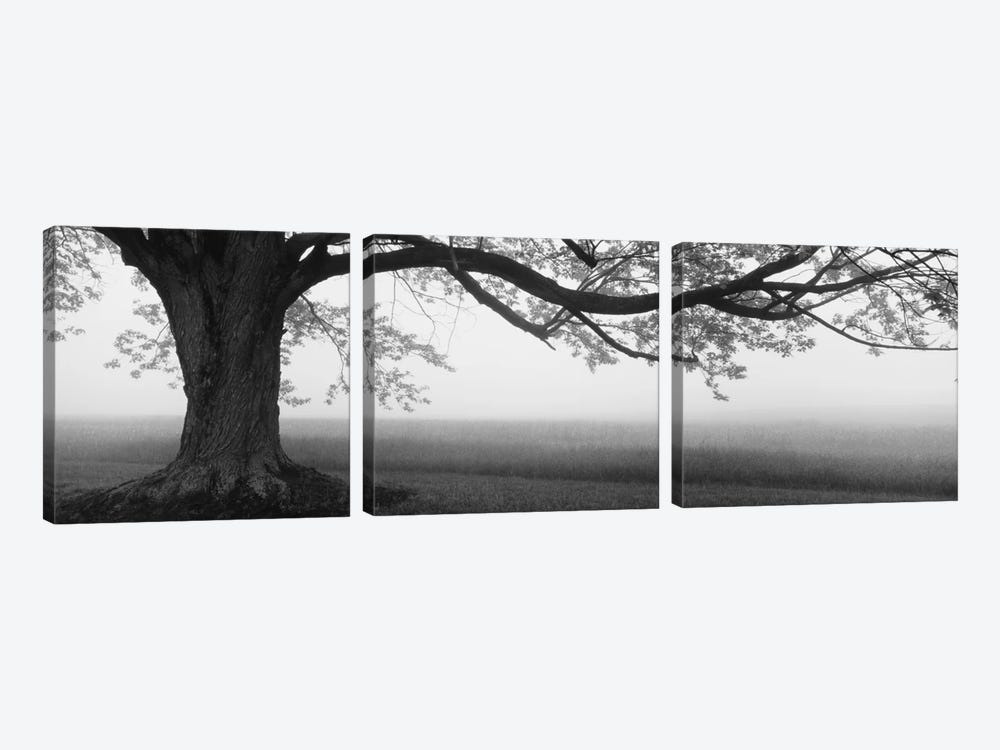 Tree in a farm, Knox Farm State Park, East Aurora, New York State, USA by Panoramic Images 3-piece Canvas Art