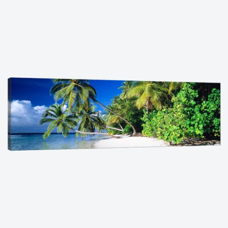 Palm Beach The Maldives Canvas Print #PIM1204} by Panoramic Images Canvas Wall Art