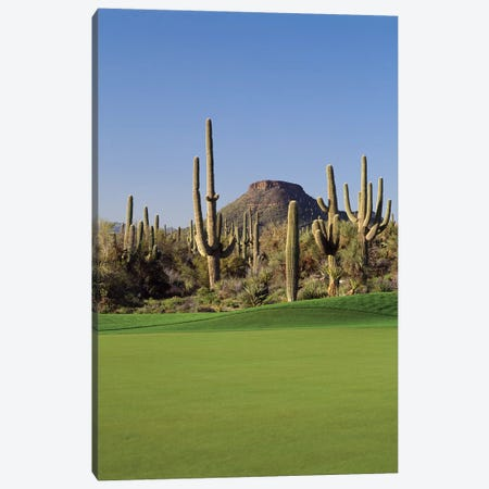Saguaro cacti in a golf course, Troon North Golf Club, Scottsdale, Maricopa County, Arizona, USA Canvas Print #PIM12476} by Panoramic Images Art Print