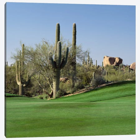 Saguaro Cacti, Troon North Golf Club, Scottsdale, Maricopa County, Arizona, USA Canvas Print #PIM12477} by Panoramic Images Canvas Print