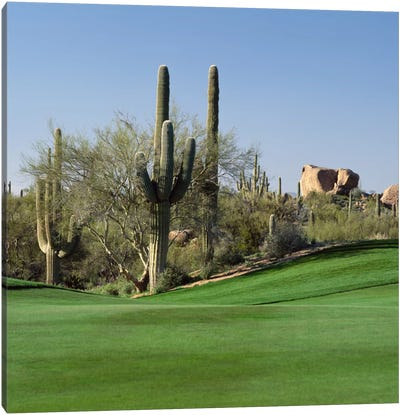 Saguaro Cacti, Troon North Golf Club, Scottsdale, Maricopa County, Arizona, USA Canvas Print #PIM12477