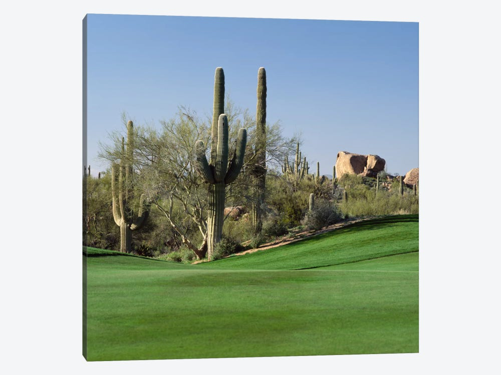 Saguaro Cacti, Troon North Golf Club, Scottsdale, Maricopa County, Arizona, USA by Panoramic Images 1-piece Canvas Print
