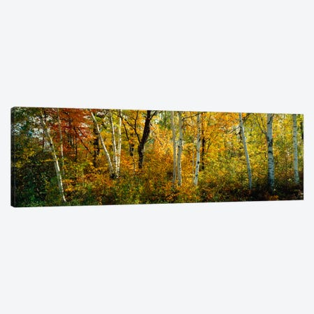 Lac Du Flambeau WI USA Canvas Print #PIM1257} by Panoramic Images Canvas Art Print