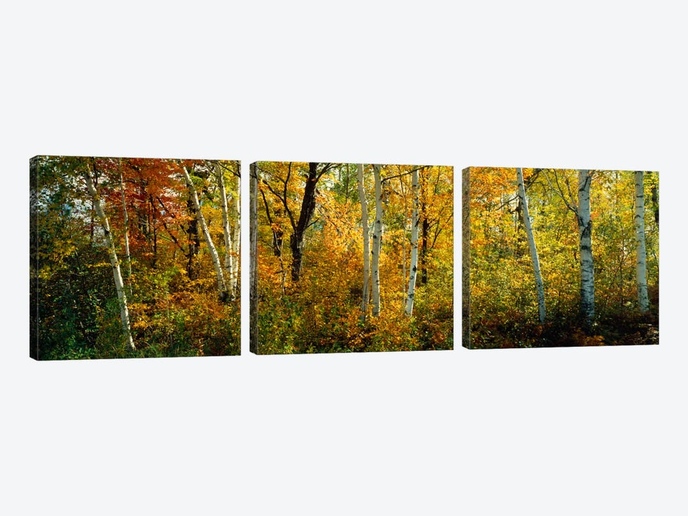 Lac Du Flambeau WI USA by Panoramic Images 3-piece Canvas Art Print