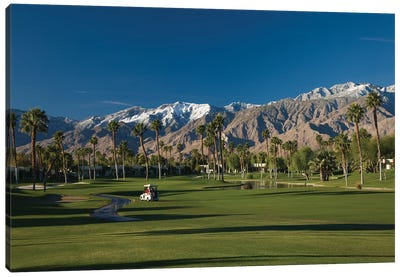 Palm trees in a golf course 4, Desert Princess Country Club, Palm Springs, Riverside County, California, USA Canvas Art Print
