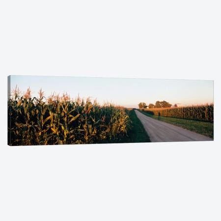 Rural Dirt Road, Illinois, USA Canvas Print #PIM1279} by Panoramic Images Canvas Wall Art