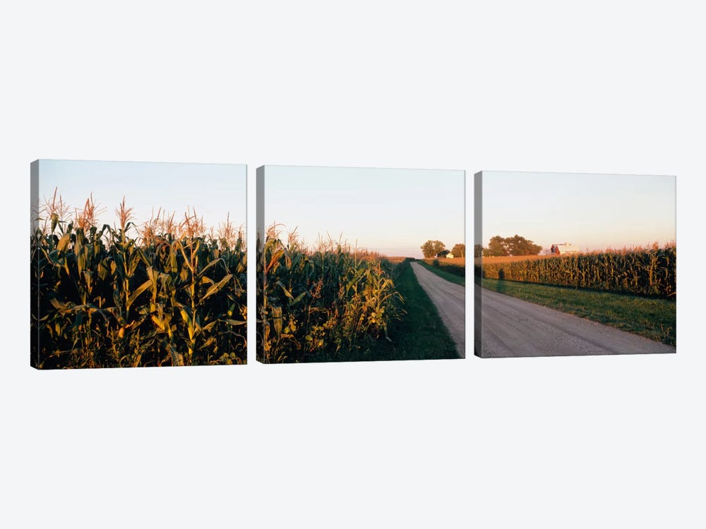 Rural Dirt Road, Illinois, USA by Panoramic Images 3-piece Canvas Art Print