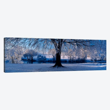 Winter Trees Perkshire Scotland Canvas Print #PIM1286} by Panoramic Images Canvas Wall Art