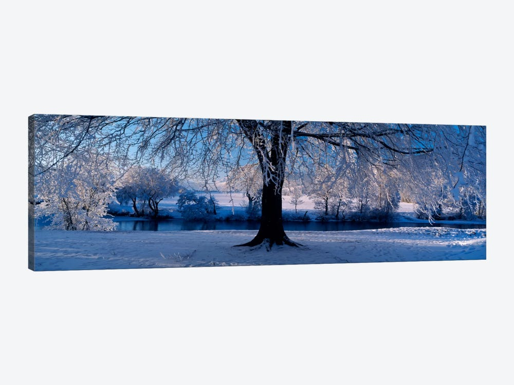 Winter Trees Perkshire Scotland by Panoramic Images 1-piece Art Print