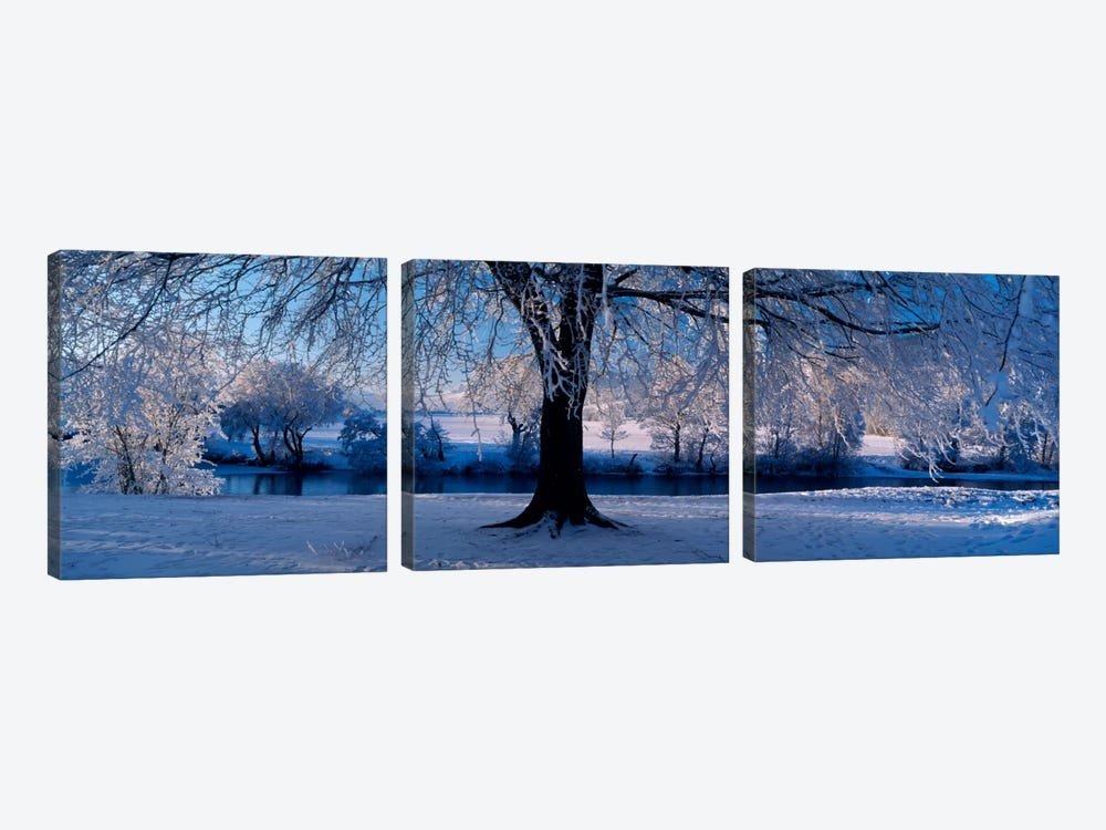 Winter Trees Perkshire Scotland by Panoramic Images 3-piece Art Print