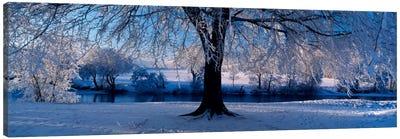 Winter Trees Perkshire Scotland Canvas Art Print