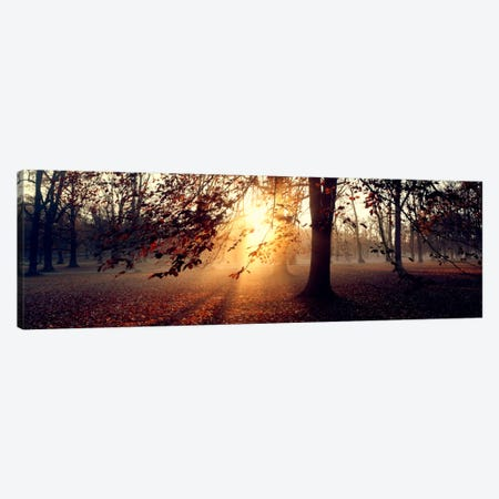 Beech Trees Uppland Sweden Canvas Print #PIM1287} by Panoramic Images Canvas Artwork