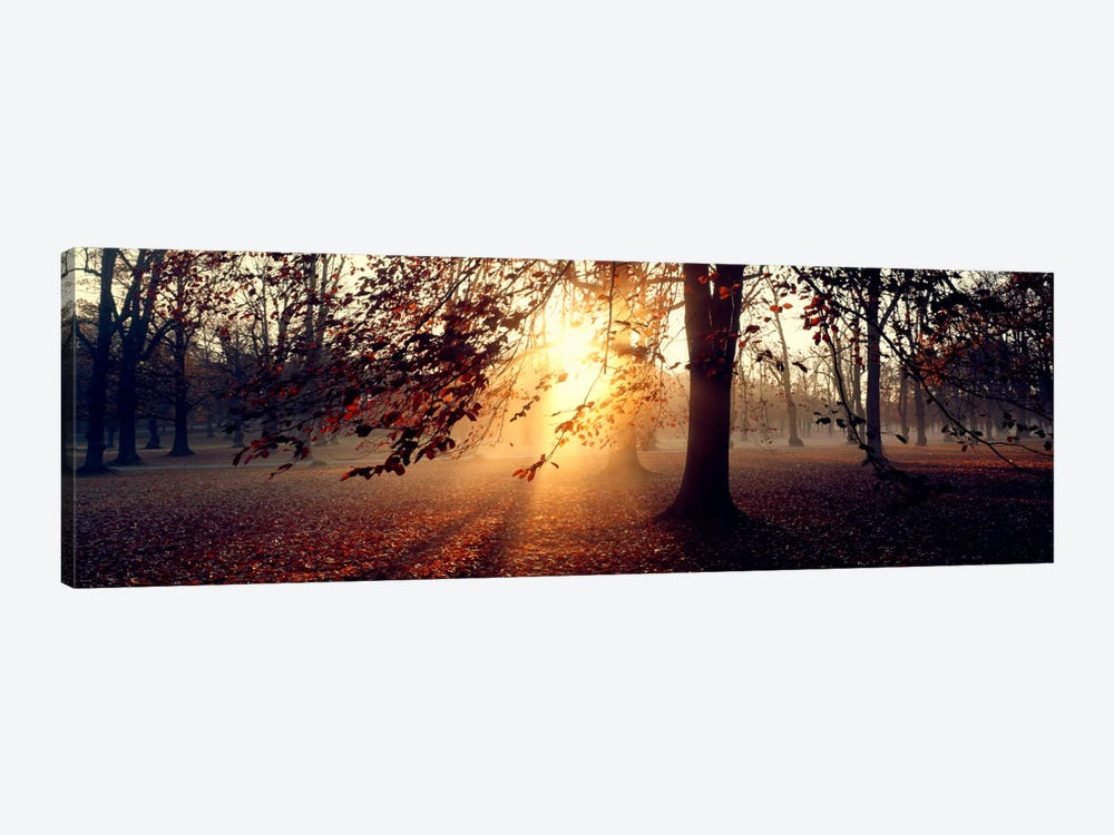Beech Trees Uppland Sweden by Panoramic Images 1-piece Canvas Wall Art