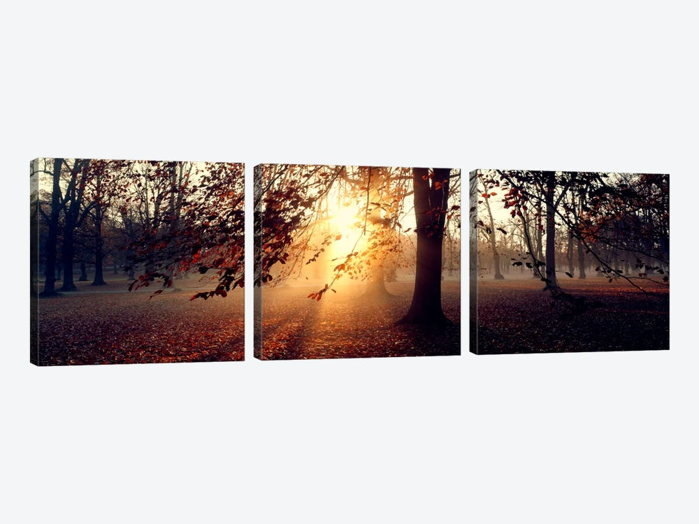 Beech Trees Uppland Sweden by Panoramic Images 3-piece Canvas Wall Art