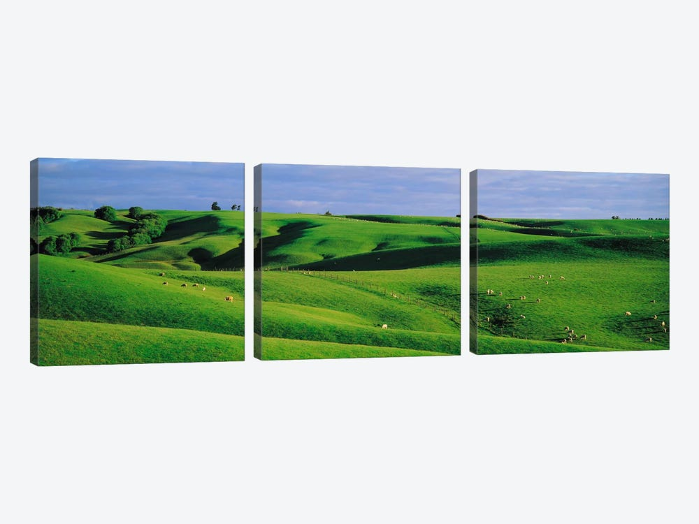 Farmland Southland New Zealand by Panoramic Images 3-piece Canvas Art