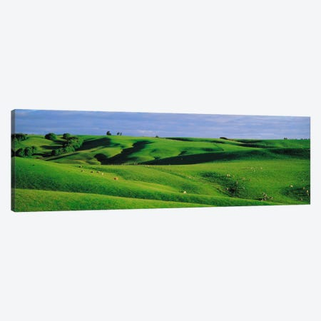 Farmland Southland New Zealand Canvas Print #PIM1289} by Panoramic Images Canvas Print