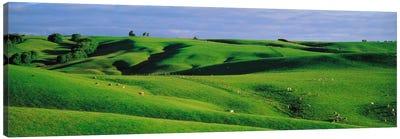 Farmland Southland New Zealand Canvas Art Print