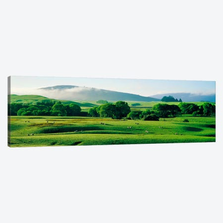 Farmland Southland New Zealand Canvas Print #PIM1290} by Panoramic Images Canvas Art