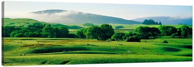 Farmland Southland New Zealand Canvas Print #PIM1290