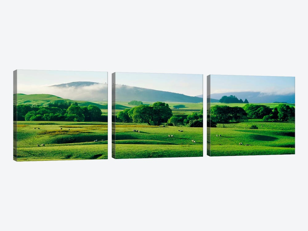 Farmland Southland New Zealand by Panoramic Images 3-piece Canvas Artwork