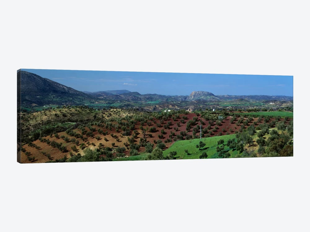 Olive Groves Andalucia Spain by Panoramic Images 1-piece Canvas Art Print