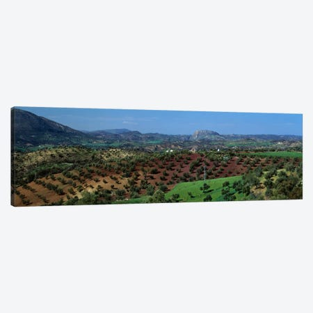 Olive Groves Andalucia Spain Canvas Print #PIM1291} by Panoramic Images Canvas Wall Art
