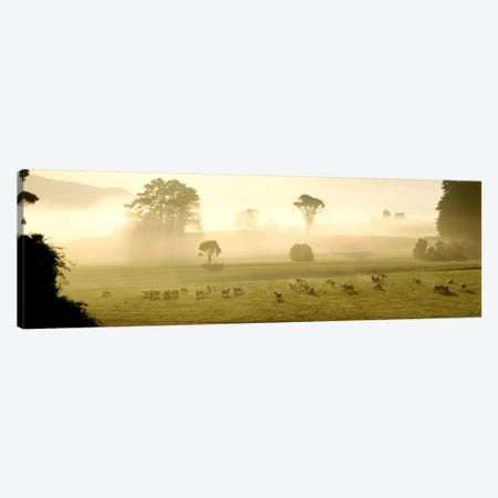 Farmland & Sheep Southland New Zealand Canvas Print #PIM1294} by Panoramic Images Canvas Print
