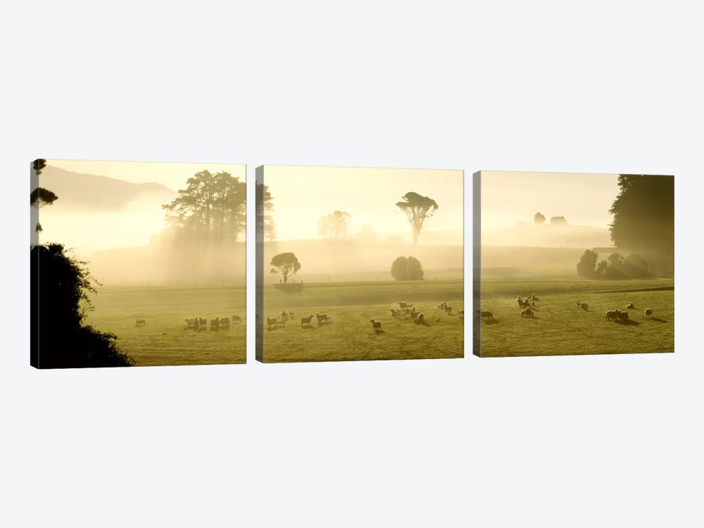Farmland & Sheep Southland New Zealand by Panoramic Images 3-piece Canvas Wall Art