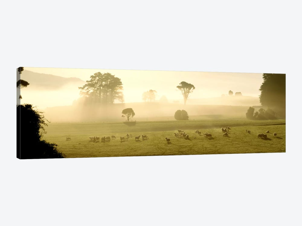 Farmland & Sheep Southland New Zealand by Panoramic Images 1-piece Canvas Art
