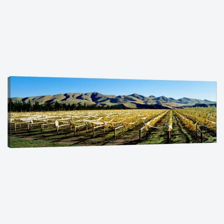 Vineyards N Canterbury New Zealand Canvas Print #PIM1295} by Panoramic Images Art Print