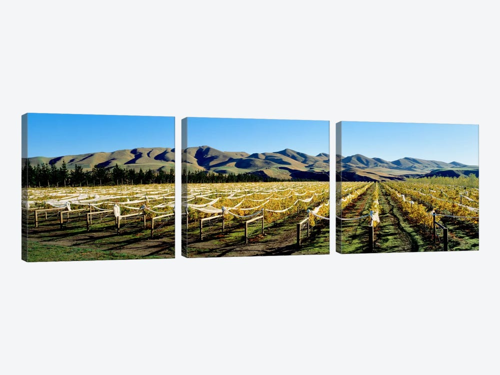Vineyards N Canterbury New Zealand by Panoramic Images 3-piece Canvas Print