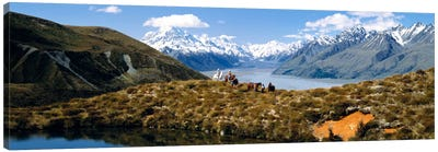 Horse Trekking Mt Cook New Zealand Canvas Print #PIM1297