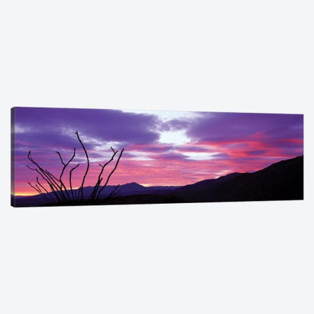Ocatillo At Sunset, Anza Borrego Desert State Park, Borrego Springs, California, USA Canvas Print #PIM12999} by Panoramic Images Canvas Art Print
