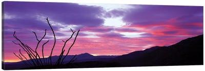 Ocatillo At Sunset, Anza Borrego Desert State Park, Borrego Springs, California, USA Canvas Print #PIM12999