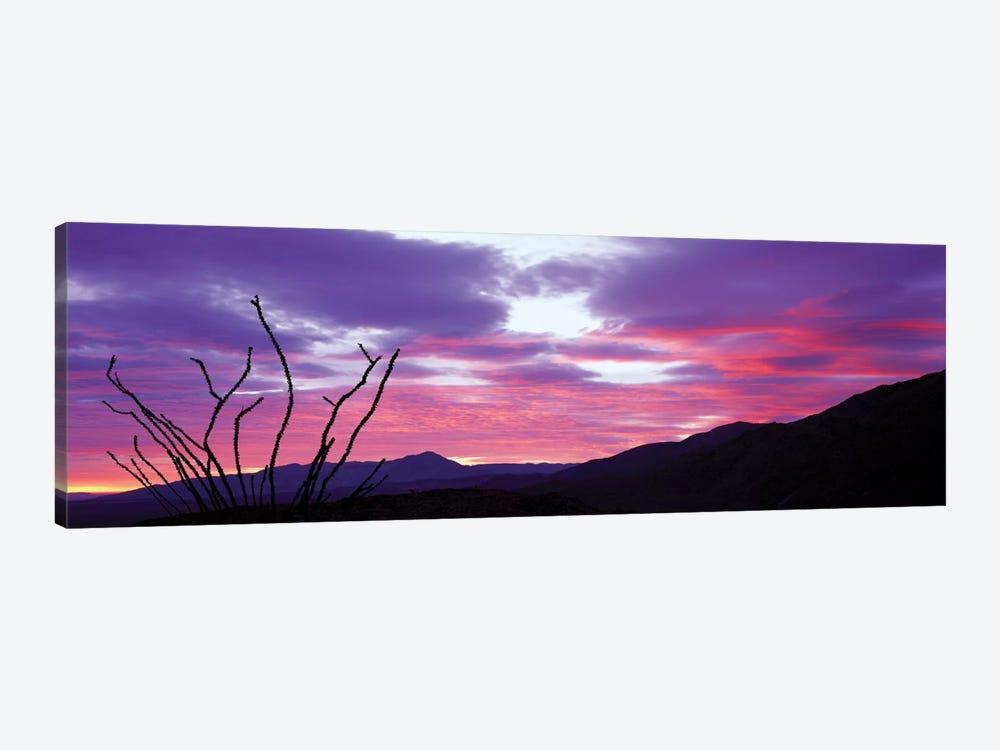 Ocatillo At Sunset, Anza Borrego Desert State Park, Borrego Springs, California, USA by Panoramic Images 1-piece Canvas Wall Art
