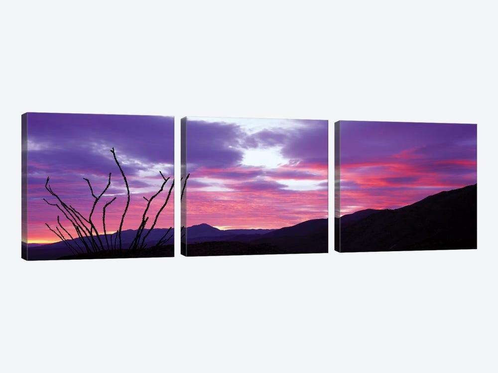 Ocatillo At Sunset, Anza Borrego Desert State Park, Borrego Springs, California, USA by Panoramic Images 3-piece Canvas Art