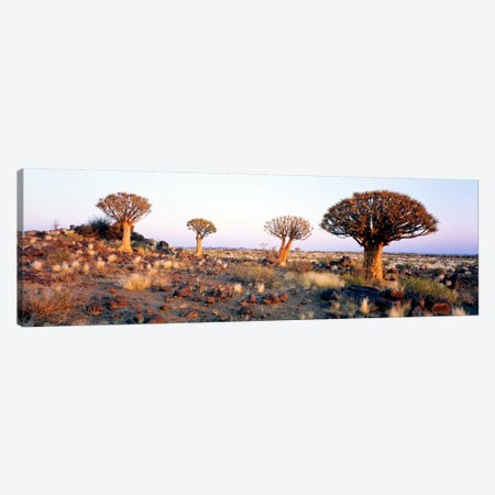 Quiver Trees Namibia Africa Canvas Print #PIM1306} by Panoramic Images Art Print
