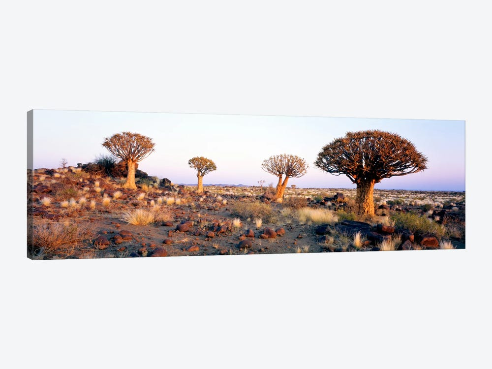 Quiver Trees Namibia Africa by Panoramic Images 1-piece Canvas Wall Art