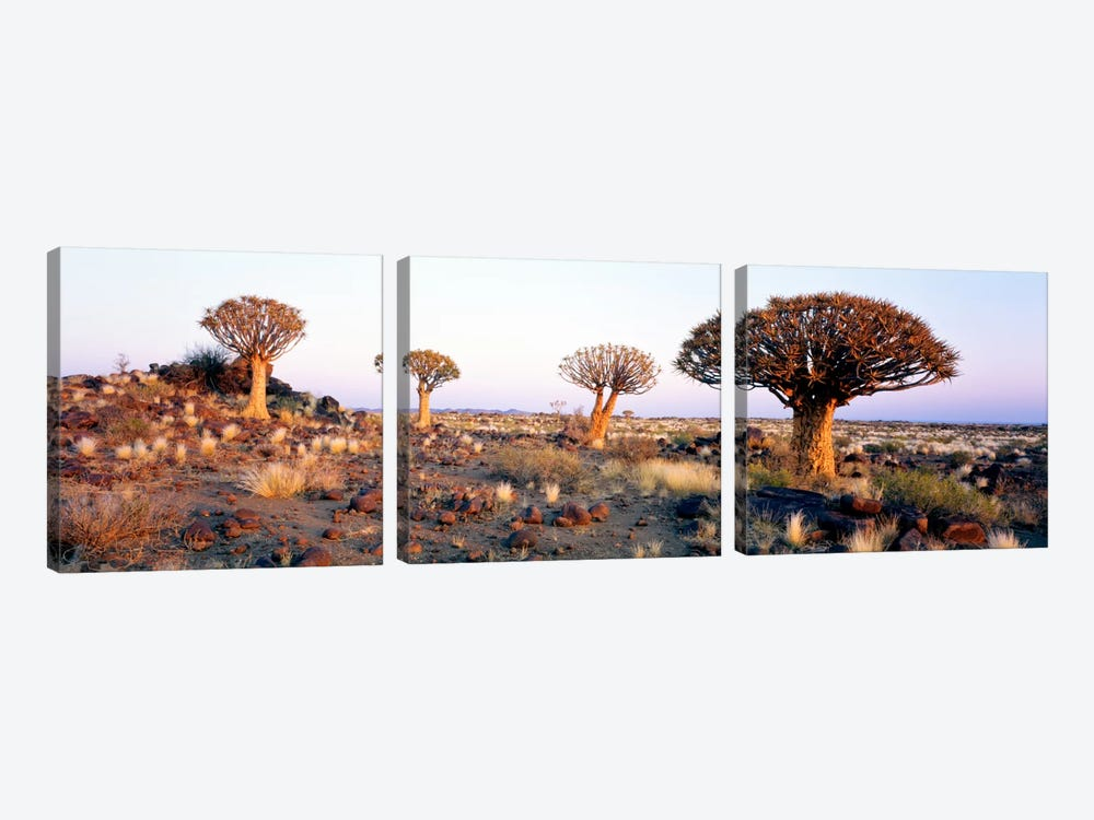 Quiver Trees Namibia Africa by Panoramic Images 3-piece Canvas Wall Art