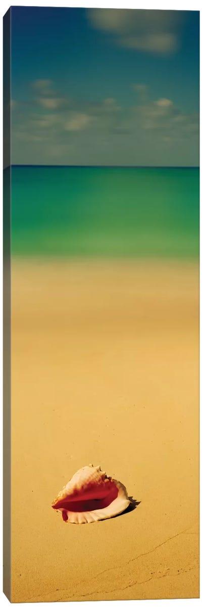 Conch Shell On The Beach I, Cat Island, Bahamas Canvas Print #PIM13142