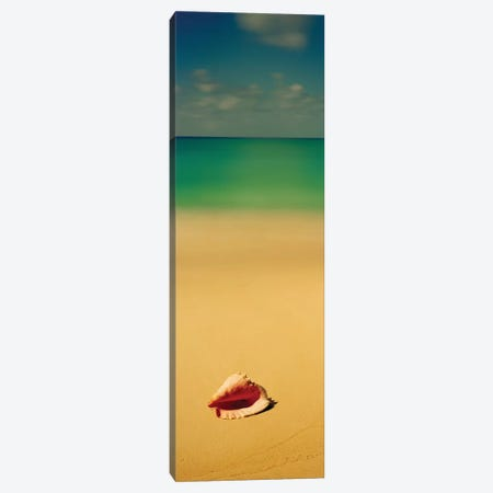 Conch Shell On The Beach I, Cat Island, Bahamas 3-Piece Canvas #PIM13142} by Panoramic Images Canvas Art Print