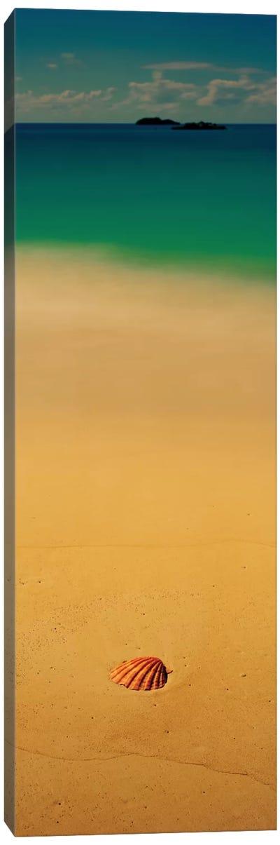 Sea Shell On The Beach, Cat Island, Bahamas Canvas Print #PIM13143