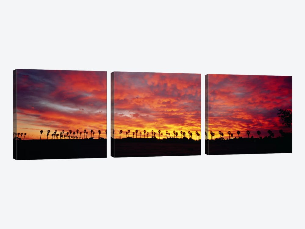 Silhouette of palm trees at sunrise, San Diego, San Diego County, California, USA by Panoramic Images 3-piece Art Print
