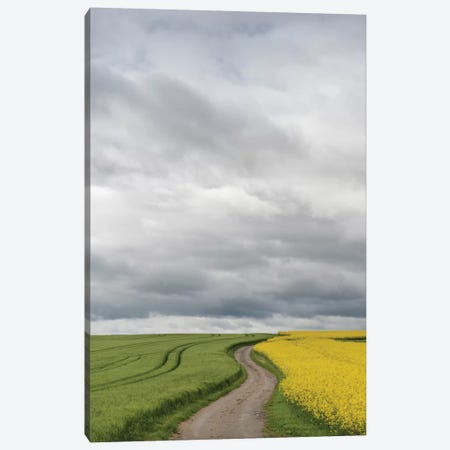 Rural Dirt Road II, Baden-Wurttemberg, Germany Canvas Print #PIM13195} by Panoramic Images Canvas Print