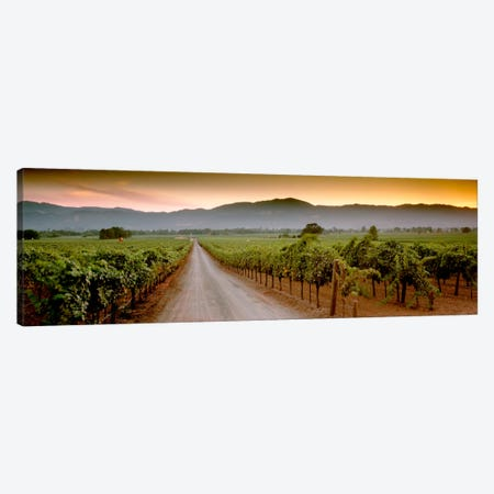 Vineyard Road, Napa Valley, California, USA Canvas Print #PIM1323} by Panoramic Images Canvas Art